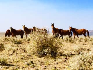 Hike to local hills to visit the wild horses:)