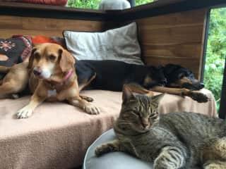 LILA, KUKI and TITO