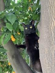 Salem in a tree 🐒