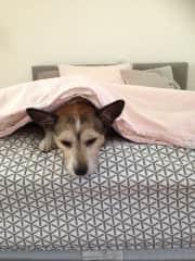 Bed snuggler