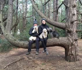 Walkies with Winnie, Puff and Inca at a housesit in Norfolk