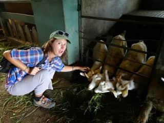 dairy farm in Sri Lanka