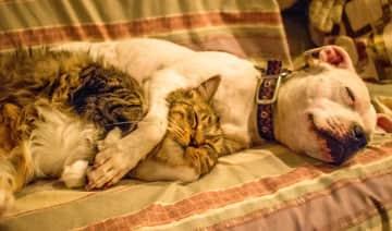 Beany and Zoe sleeping