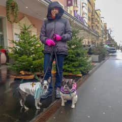 Diego & Valentina. Dogs we looked after in Zurich, Switzerland