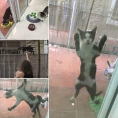 Spider cat (Phu)