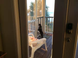 MIss Kitty on vacation in Florida