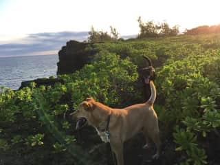 Razzy and Alakai on their sunset walk.