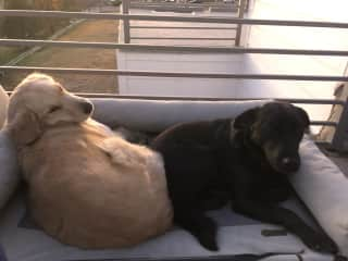 Moose with his new bestie Josie (trustedhousitters sit)