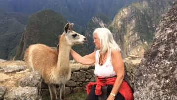 Llama Machu Piccu 2017
