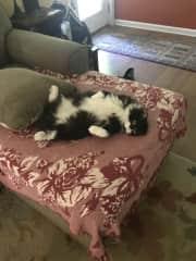 Albert just relaxing