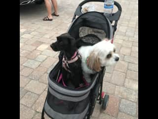 Dog-sitting Penny down in Florida. She naps cuddling Shay and even shares her little buggy with her.