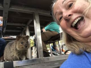 A selfie with a quokka! All but a few live on Rottnest Island off of Perth, WT Australia. I went after finishing a petsit