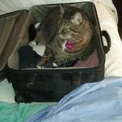 Boudreaux wants to come too!