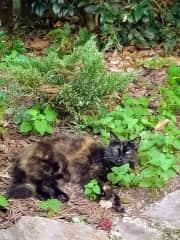 Baby in the catnip