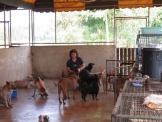 Me with rescue dogs in Thailand