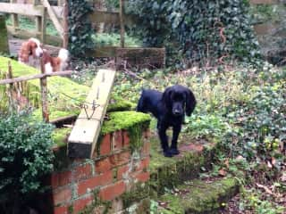 A lovely spaniel and a rambunctious young working cocker were our companions on a housesit of a wonderful Victorian mill house near Basingstoke, UK