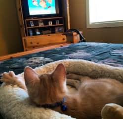 Milo likes to watch tv