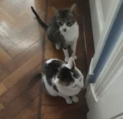 Our two kitties