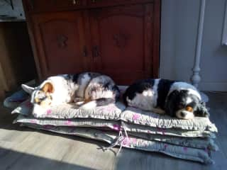 My two dogs Mona and Amy