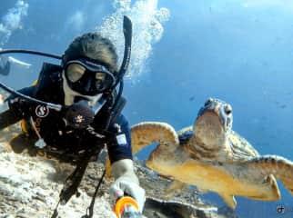Diving in Sipadan Island, Malaysia