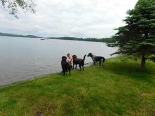 Our son on a trip to Maine...picked up a stick, found a fan club of retrievers!