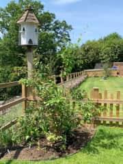 Summertime in the garden