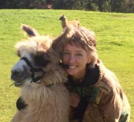 Visiting a llama farm.