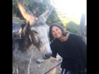 Donkeys and I have lots in common.