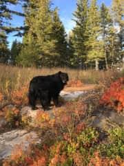 Duggan the dog/bear
