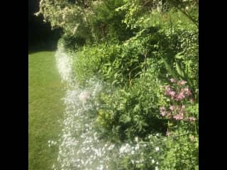 Raised border in rear garden June 2021