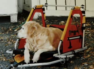 Shanda, our first dog, lost a leg due to cancer. Dan modified this kiddie bike trailer so she could still come for bike rides with us.