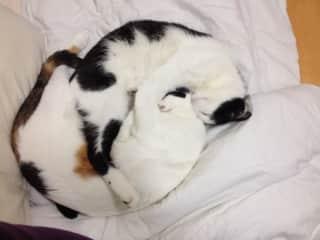 Bi-cuddle