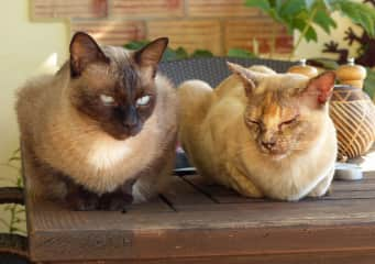 Napoleon (left) and Jinx