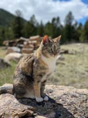 Miss kitty in the wild