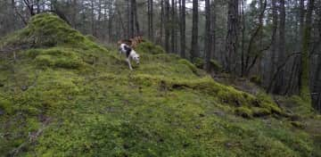 Cleo and Zoe in Metchosin, BC