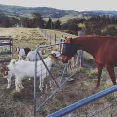 Lucky Boy (1/6 goats) - Hartley