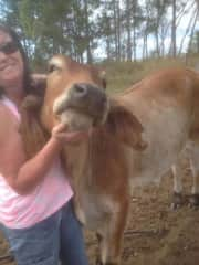 My cattle and me