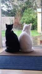 Smeagle and Ulisse watching rain