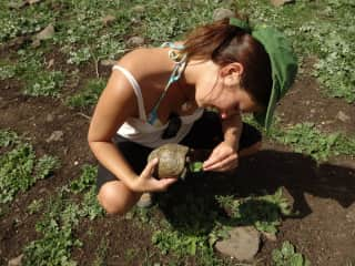 turtle in Golan Heights