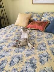 Phantom sleeping in guest room