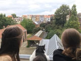 Summer sit in Brussels, 2020