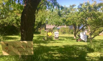 Our honeybee hives in our orchard for pollinators