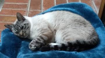 Beautiful Micco enjoying a fireside nap