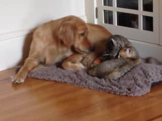 Kitsap, Mitsu and Ino all sharing a bed.