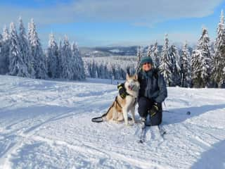 Skijoring with Vendy in Krkonose mountains, Czech Republic