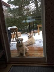 Sweet Kip and Grand dog Apollo
