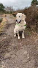 Holly on a walk