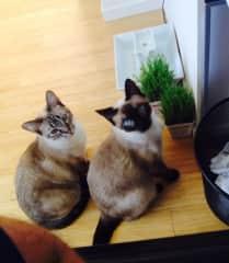 Xochi and Celeste