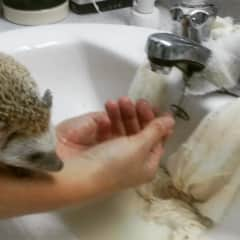 taking care of my friends hedgehog