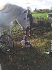 Both Margaret and Christine Love Horse Riding - Ruby is having a heart to heart with the horse. :)